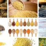 Millets for Diabetes – Calories & 5 Health Benefits