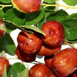 Is-Ber-Fruit-(Jujube)-Good-for-Diabetics