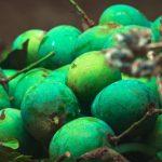 Will Raw Mango increase Sugar in Diabetes 9 Benefits